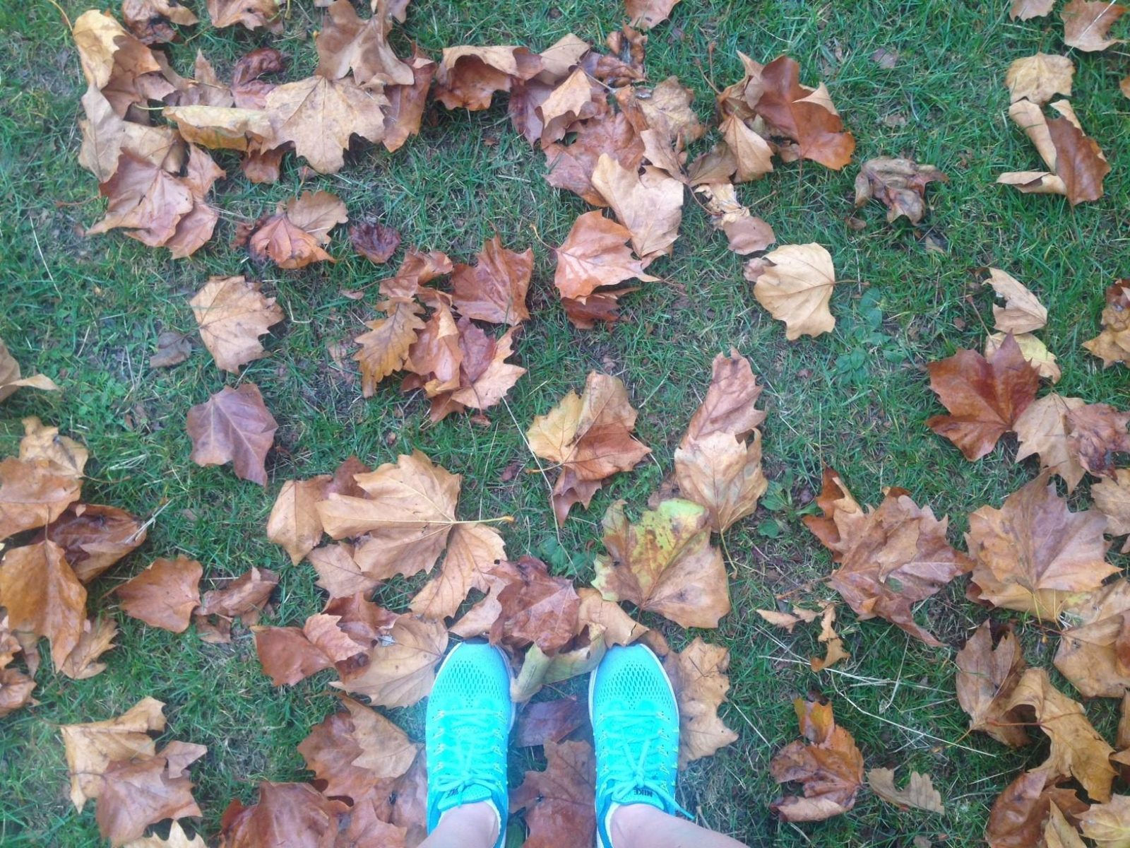 Autumnal running